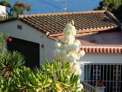 Bild zur kostenlos inserierten Ferienunterkunft Platz für 5 Personen in Tossa de Mar.