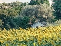 Bild zur kostenlos inserierten Ferienunterkunft CASALE CIVETTA - Monolocale BUBO.